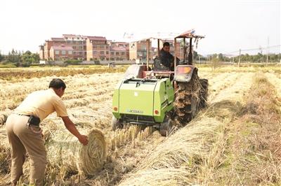 金华武义对农业的重视让武阳春雨绿茶崛起