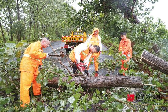 武洛公路树木倒伏公路局奋战两小时
