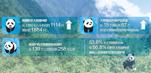 野外大熊猫濒危状况进一步缓解