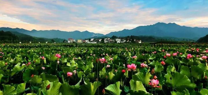 衢州,这样建设美丽田园!