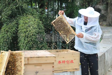 """蜂农的""""甜蜜""""箱"""