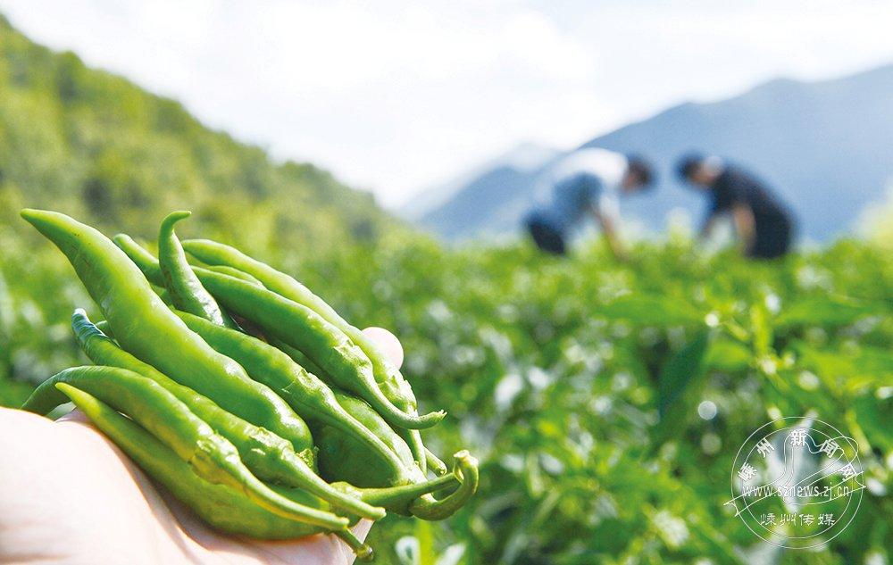 高山农业 增收致富