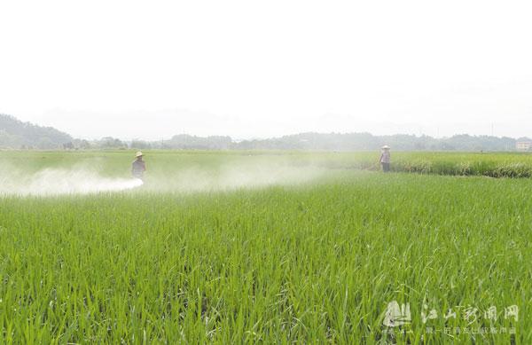 加强稻田管理