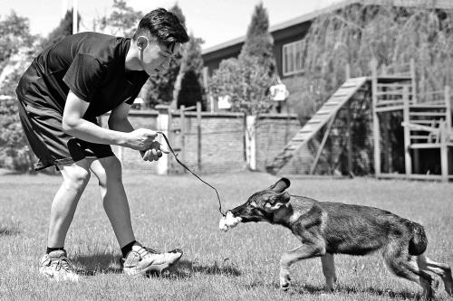 训练小警犬