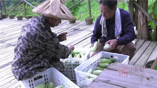 26小时,蔬菜从衢州农场摘下送到杭州餐桌