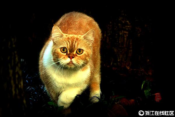 【行行摄摄】猫