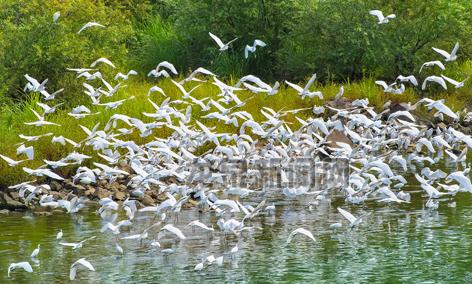 万鸟集结舞翩跹