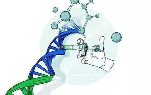 人体内现转基因作物中常见基因?