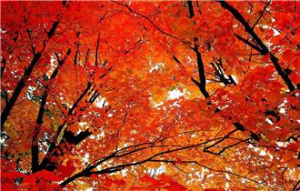 秋季皮肤问题多 唱好保养三部曲