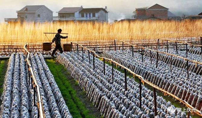 创新产业发展路径 促进东部乡村振兴