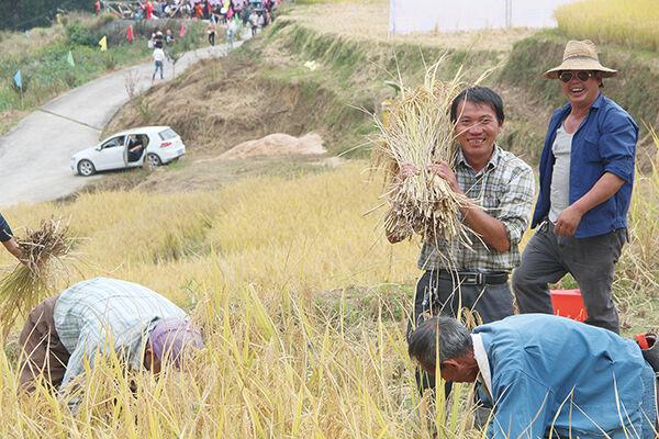 有机水稻获丰收 附加值高销路好