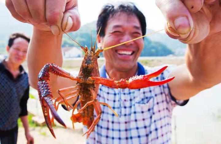 浦江白马镇:集体经济联创项目结出硕果 一只小龙虾鼓了四个村的钱包