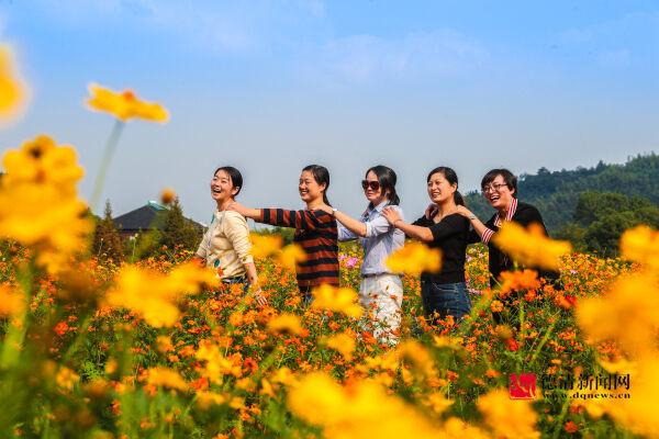下渚湖畔上杨村 硫华菊开美如画