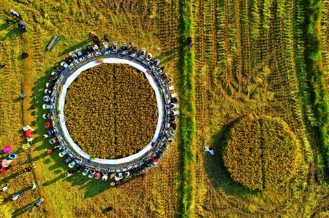 海峡两岸同胞共享森林康养稻田美食节