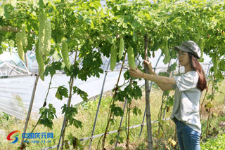 果蔬丰收带动市民采摘游