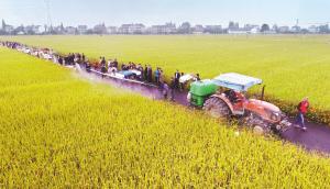 肥药减施 水稻增产