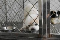 领养替代购买,这些狗狗等你带它们回家!