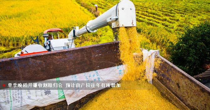 单季晚稻开镰收割粮归仓 预计亩产较往年有所增加