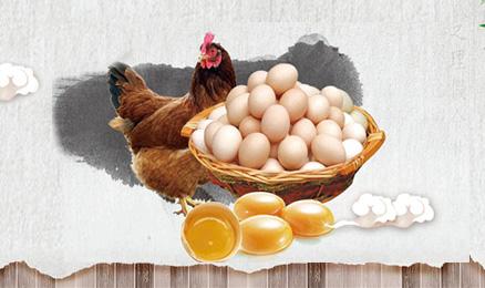【第165期】蛋壳颜色不能反映鸡蛋营养价值