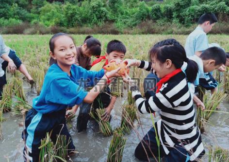 市实验小学的学生们在兰巨乡家庭农场体验农活