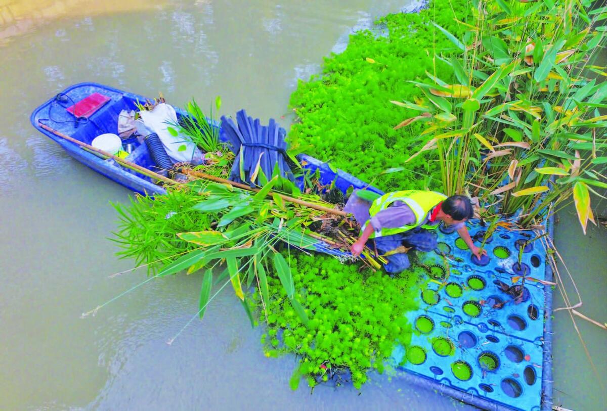 生态治水忙