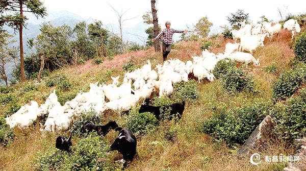 生态种养 助农增收