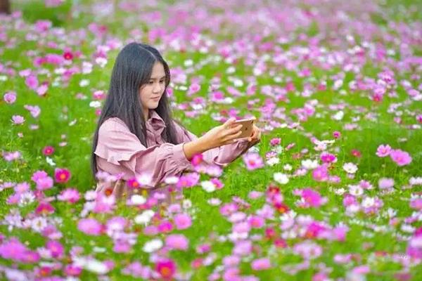 蒋家埠村 秋天的花海