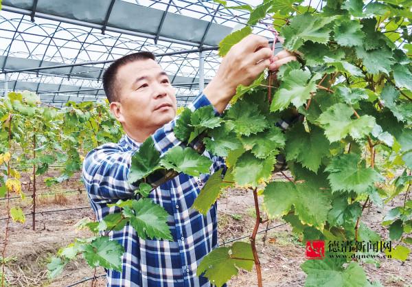 水果种植做加法