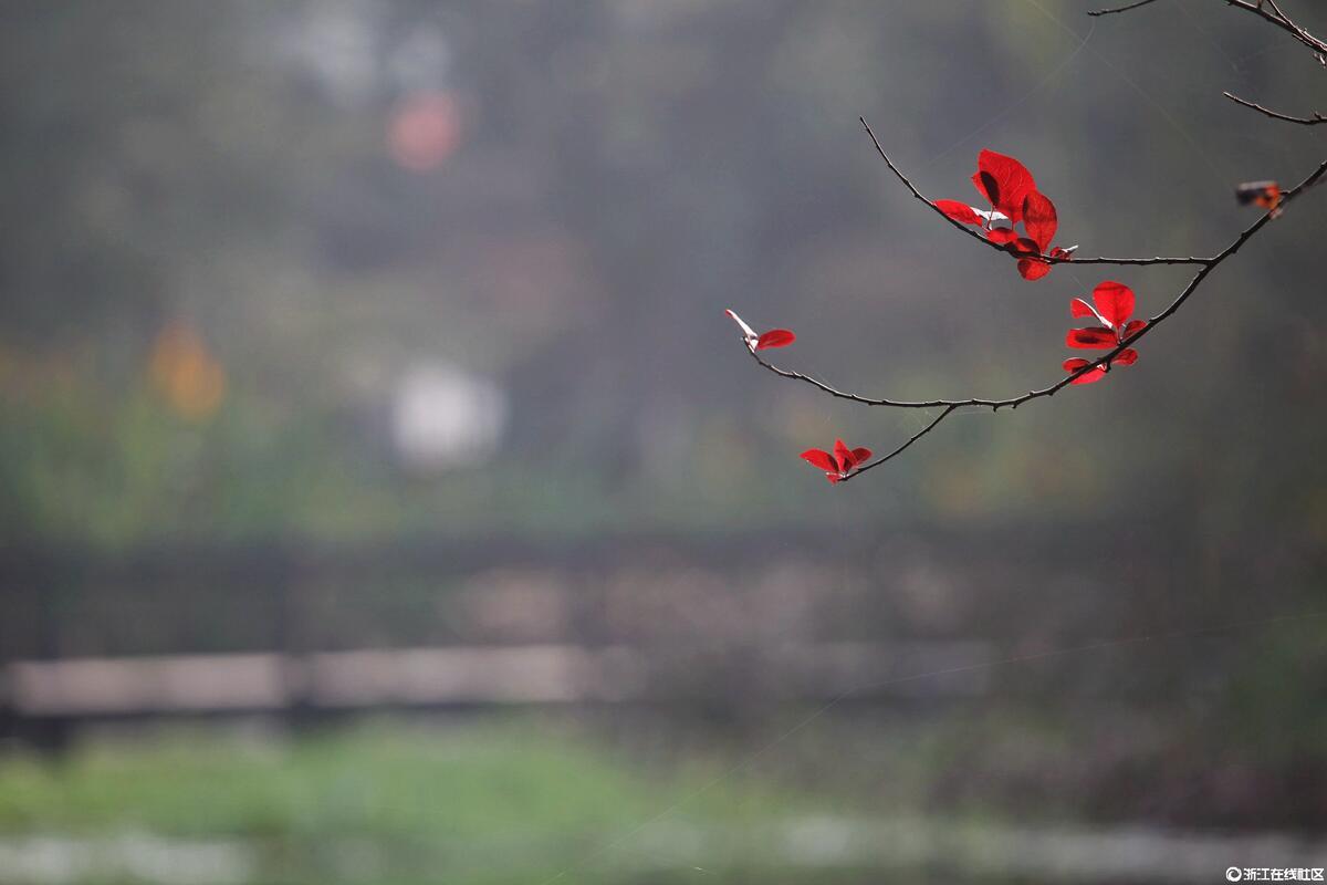 【行行摄摄】深秋几点红