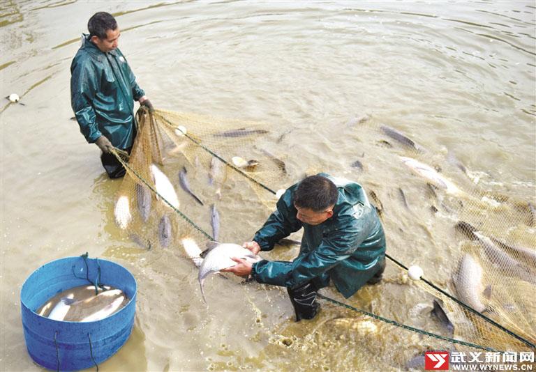 武义:人欢鱼跃丰收景