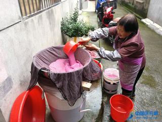 农家忙制番薯粉