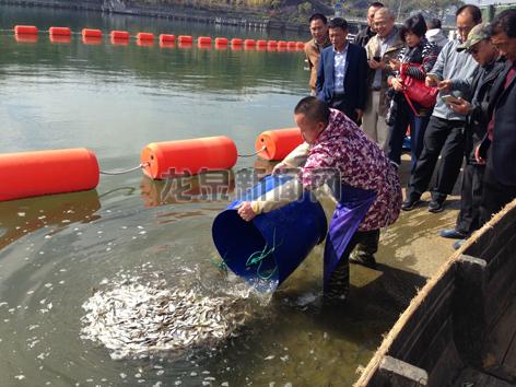 为更好保护水域生态市水利局在城区瓯江一号码头等地投放洁水鱼苗