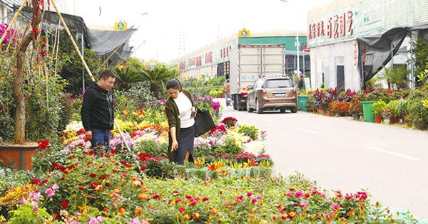 第十六届中国(金华)花卉苗木交易即将开幕