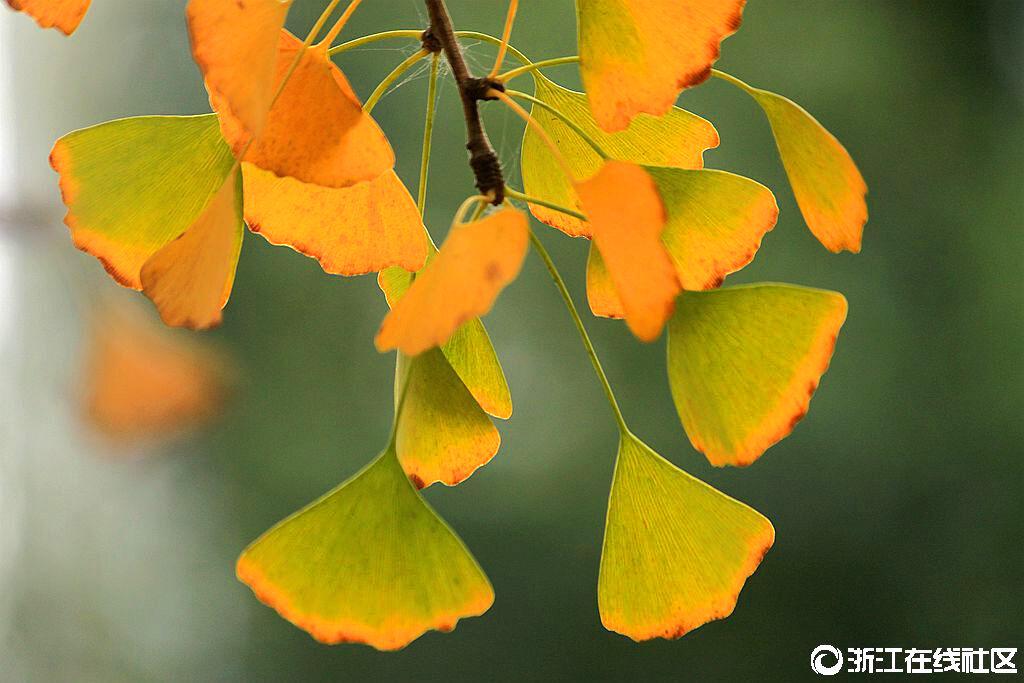 【行行摄摄是】深秋多金色