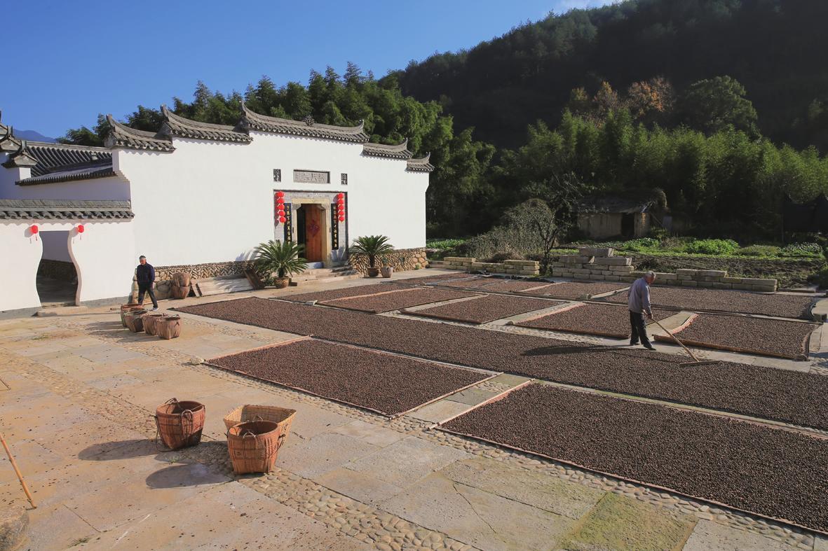 村民在晾晒今年最后一批油茶籽