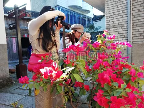 住龙镇红军老街上的鲜花引得游客纷纷拍照
