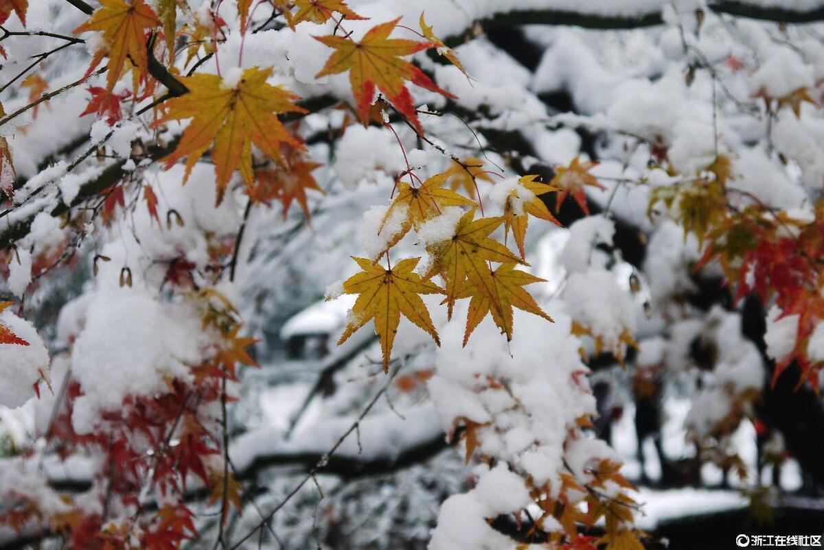 【行行摄摄】今冬第一场雪
