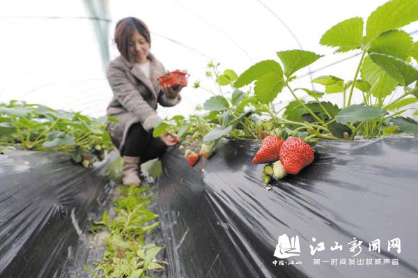 本地草莓上市