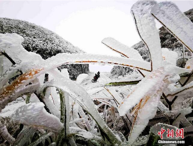 广西环江万亩草甸出现雾凇景观(组图)