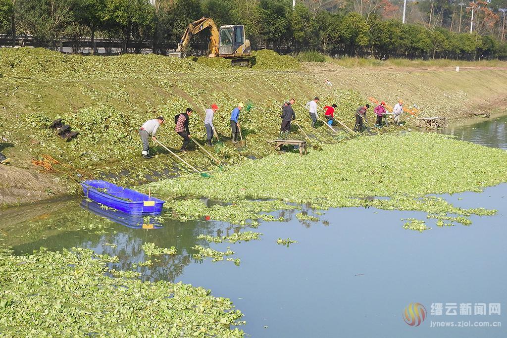 清理水生野菜 呵护好溪