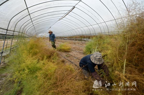 越冬作物田间管理