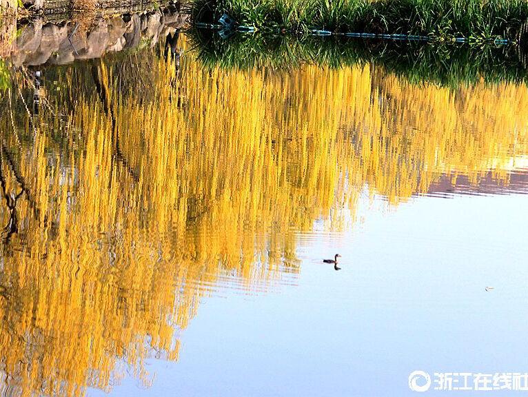 【行行摄摄】初冬湿地