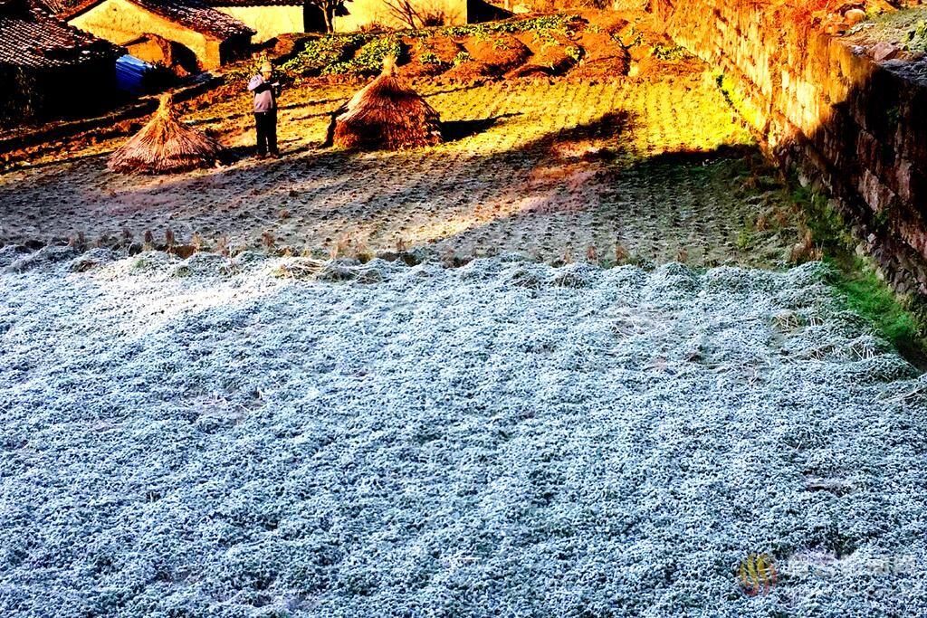 山乡之晨 落霜之美