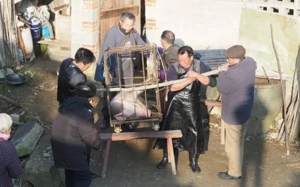 腊月二十六,杀猪割年肉