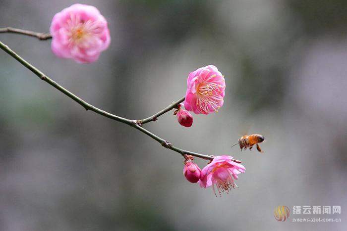 立春:一年之计在于春