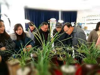 县第三届兰花鉴赏会在新天地举行