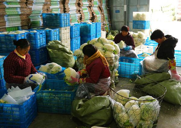 玉环新农公司解决农户卖?#22235;? width=