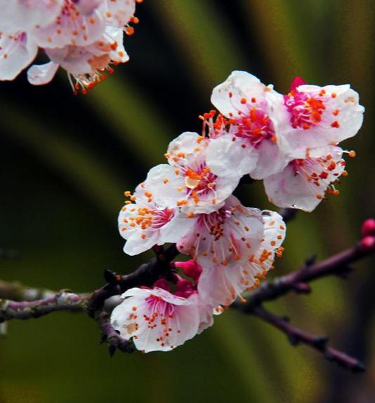 一樹春風屬杏花
