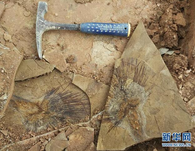 棕榈叶化石揭开青藏高原年轻时的模样