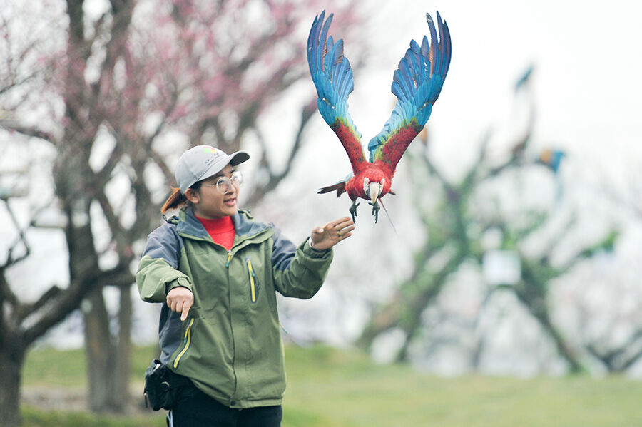 驯鸟师:让鸟儿说话